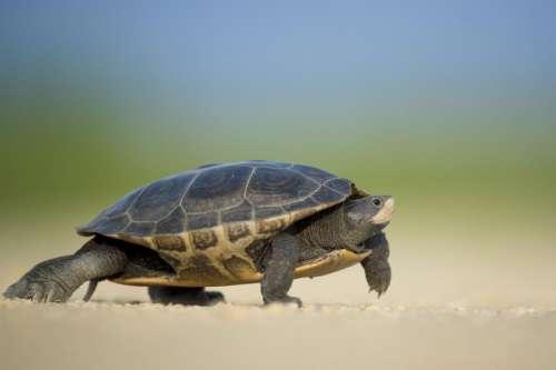 animals amphibians turtles house shell