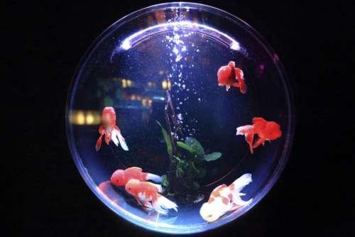 aquarium fish water bubbles animal