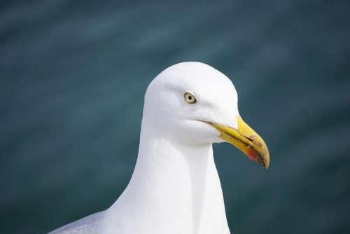 animal bird seagull white eye
