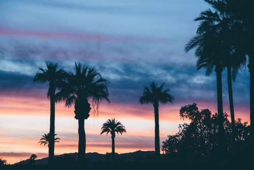 sunset dusk silhouette palm trees clouds