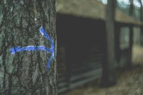 tree arrow sign blur outdoor