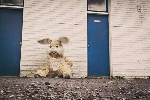 bunny rabbit costume sign rocks
