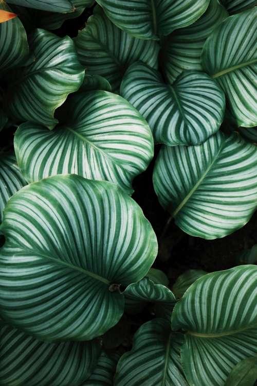 green leaf plant nature
