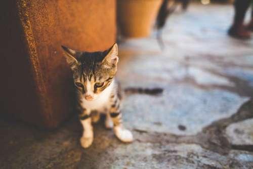 floor cat kitten pet animal