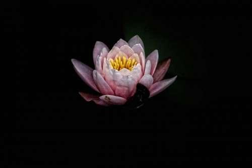 dark pink flower petal bloom