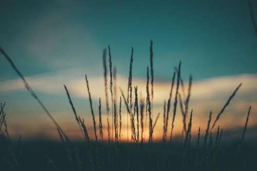 dark sunset sunrise grass field