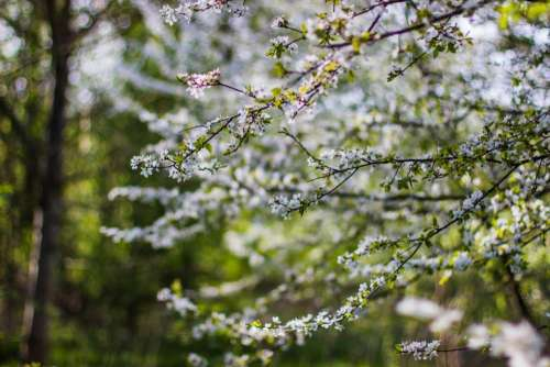 flower tree plant nature bokeh