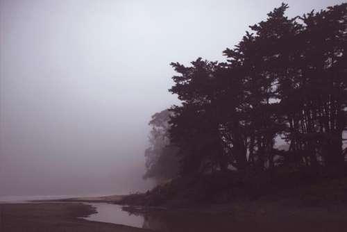 coast shore trees plants nature