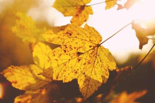 leaf autumn fall nature blur