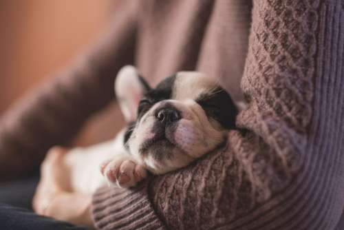 dog sleeping tired puppy animal