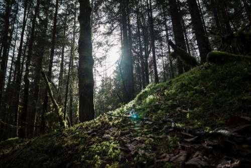 highland green grass nature forest
