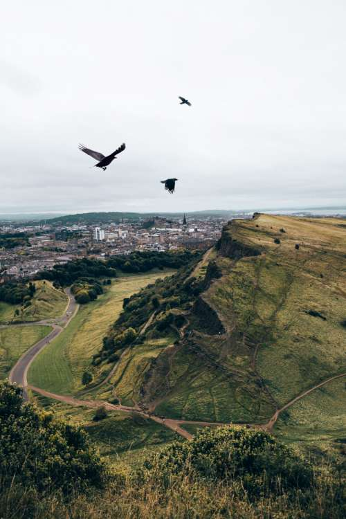 birds flying mountains crows grass