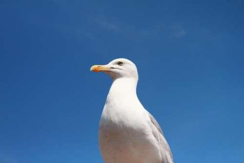 seagull bird animals blue sky