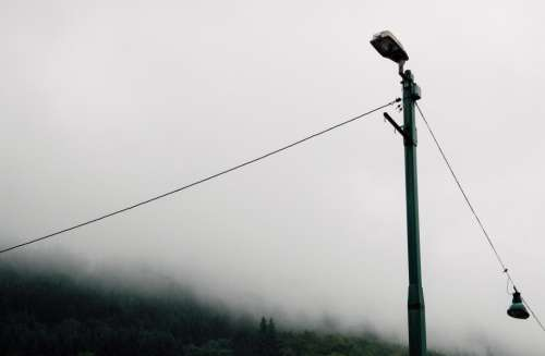 pole wire trees plant fog