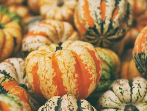 squash vegetable orange pumpkin halooween