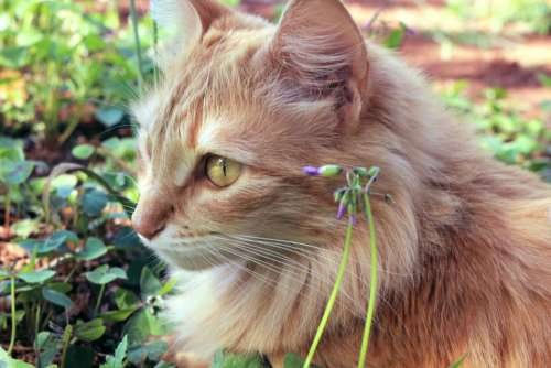 cat pet animal green grass