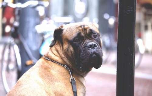 animals dog domesticated pets eyes