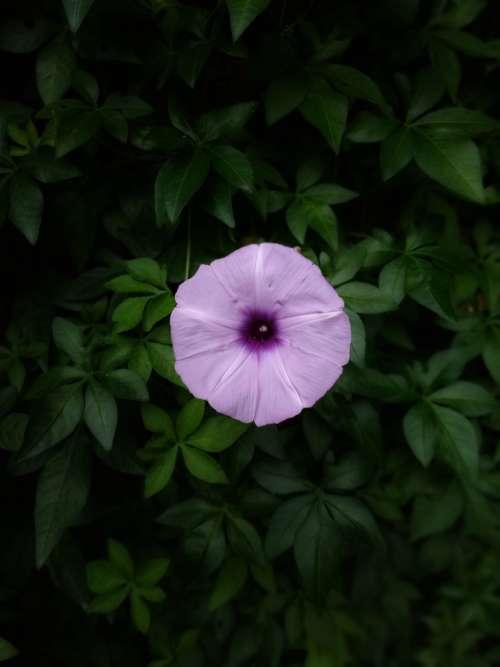 flower garden top single petals