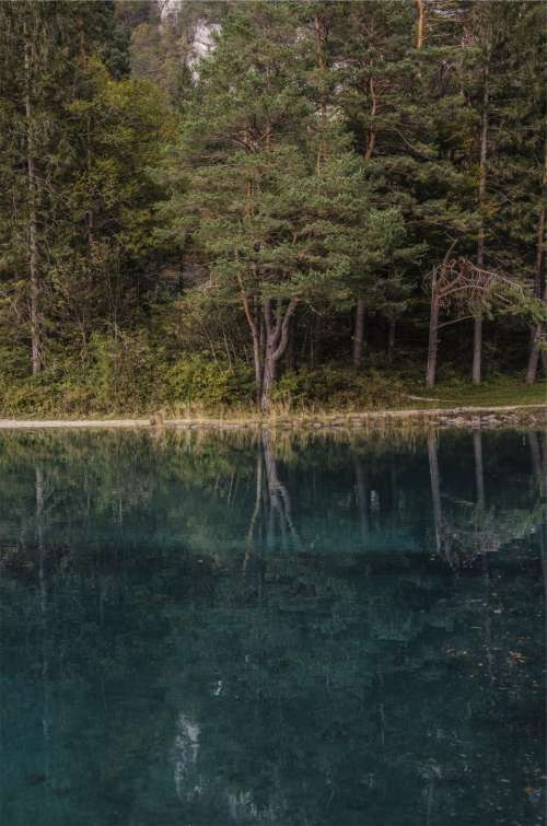 lake water reflection trees forest