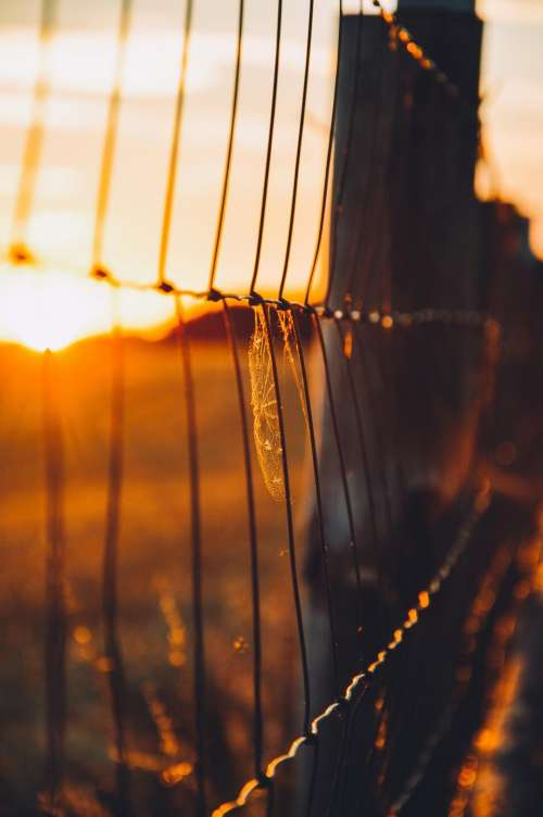 chainlink fence sunset dusk rural