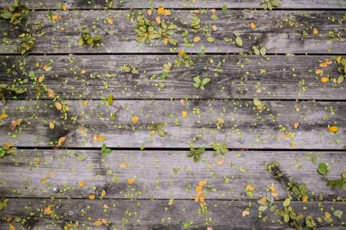 wood leaves