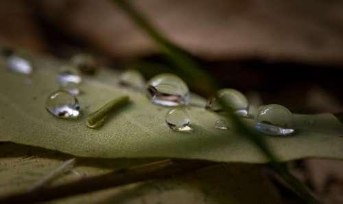 leaf outdoor wet water raindrops
