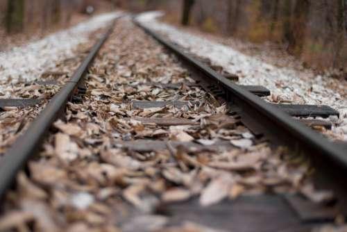 leaf fall autumn track railway