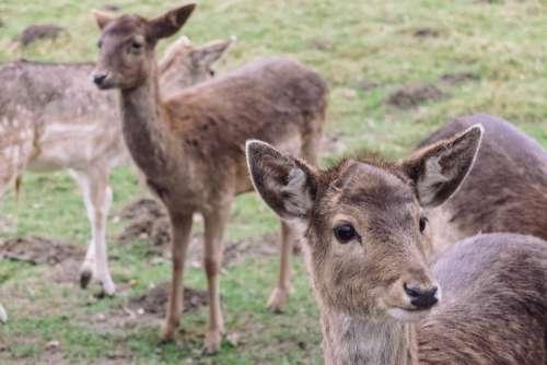 deer wildlife animal green grass