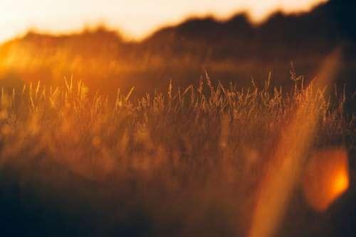 grass plant field sunset sunrise