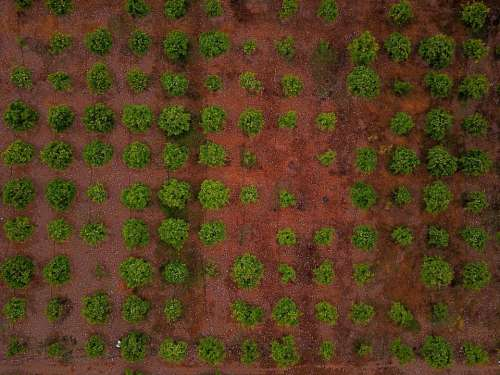 green trees plant nature farm