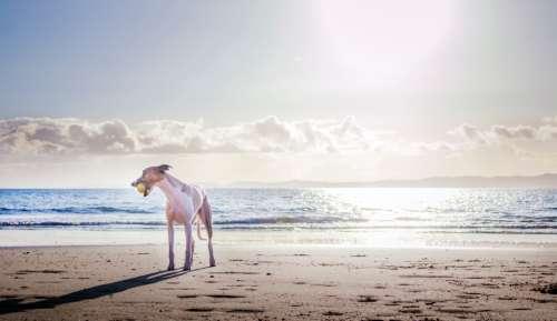 dog beach ball playing sand