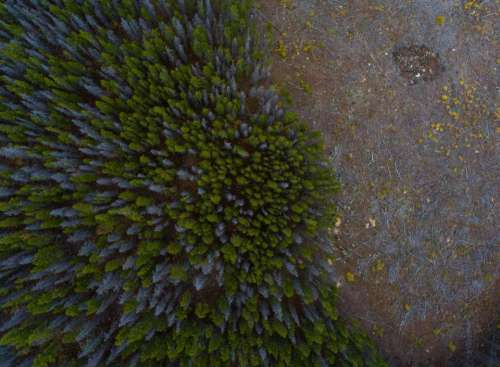 aerial view trees plants feal