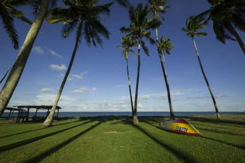 coconut tree green grass beach