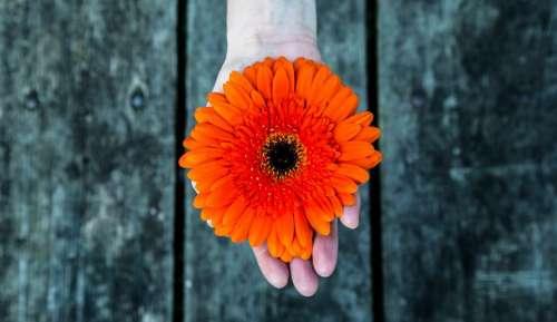 hand palm wood orange flower
