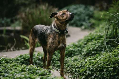 dog animal pet green grass