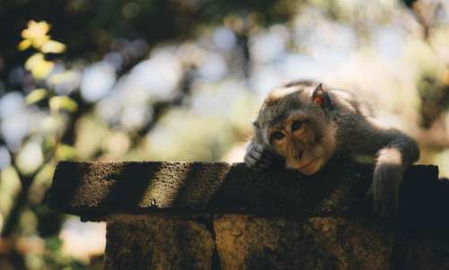monkey animal pet zoo forest