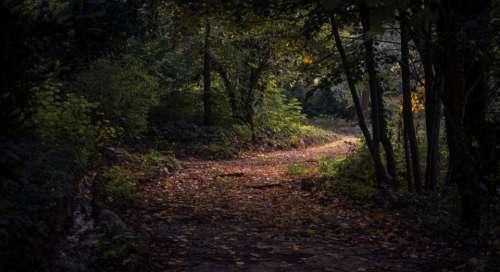 leaf fall autumn path forest