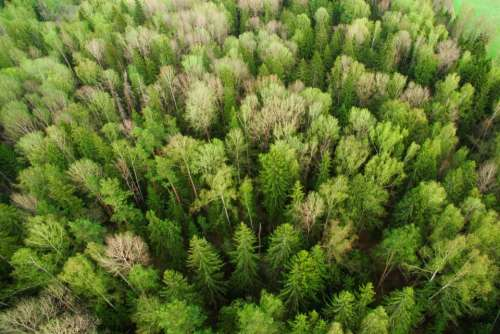 green plants nature aerial view
