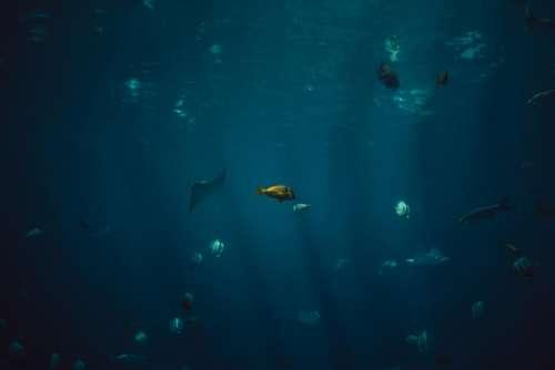 fish aquatic animal ocean underwater