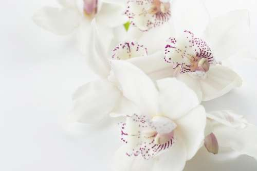 white blossoms flowers beauty bouquet