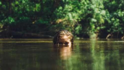 people woman underwater water ocean