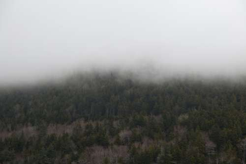 forest mountain fog clouds weather