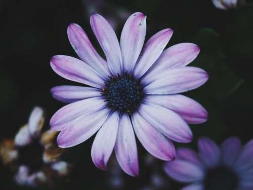 flowers nature blossoms petals violet