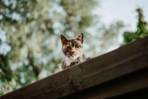 cat kitten animal pet blur