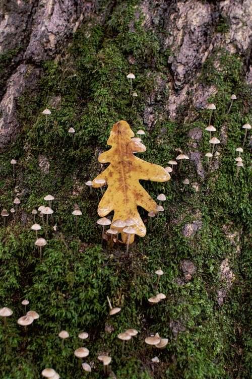 nature tree plants grass mushrooms
