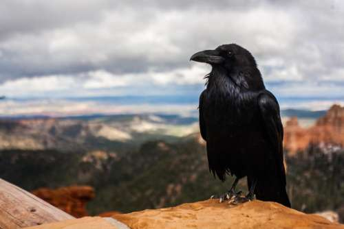 hawk bird animal landscape nature