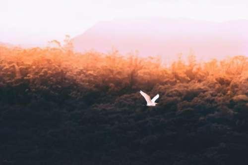 trees bird flying nature sky