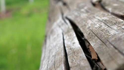 wood texture bark
