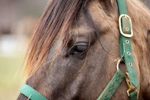 horse eye closeup brown animal