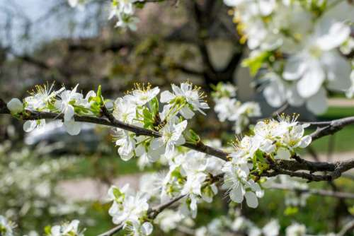 white flower tree plant blur
